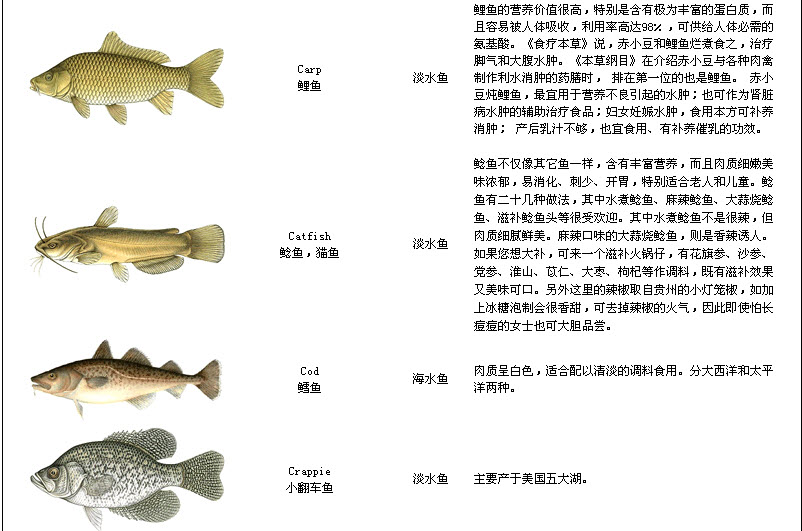 Names of fish lisparc for Name of fish